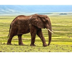 Top 10 Amazing Facts About Elephant Everyone Love To Know