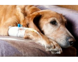Is Cancer Prevention For Your Dogs Possible?
