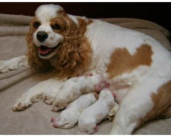 Best Ways To Help A Dog Produce More Milk for Her Puppies