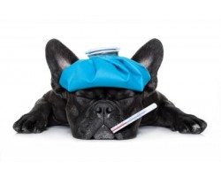 10 Warning Signs You Should Take Your Dog to the Vet