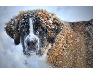 Best Winter Care Tips for your Dogs