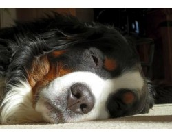 6 Effective Ways to Stop Your Dog from Snoring