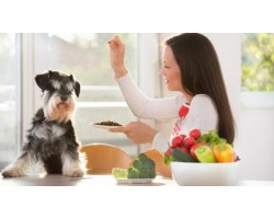 10 Human Foods to Share With Your Dog