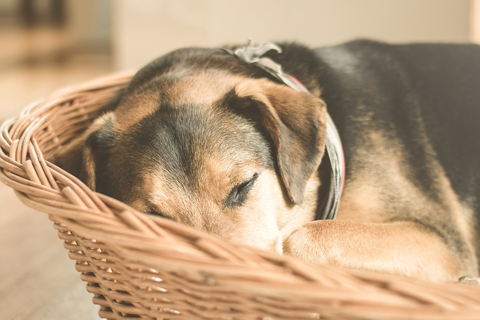 Dogs will show signs of sickness in early stages